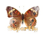 Vintage Superfly Brown Butterfly