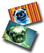 Chinese Pug Prints