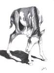 Paint foal, Godda Scratch,