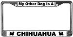 Chihuahua (Long-Hair)