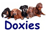 Dogs... Doxies and more!