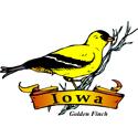 Iowa Golden Finch