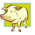 Pig Apparels