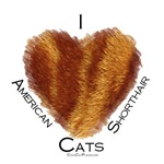I (heart) American Shorthair Cats