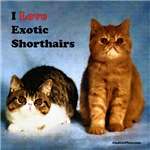 I Love Exotic Shorthair Cats