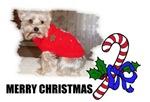 MERRY CHRISTMAS YORKIE