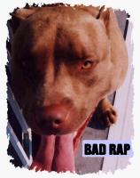 BAD RAP ( AMERICAN PIT BULLS)