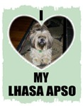 I LOVE MY LHASA APSO