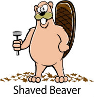 SHAVED BEAVER!