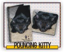 Pouncing Kitty