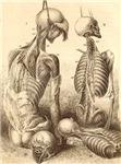 artistic skeleton 1