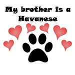 My Brother Is A Havanese