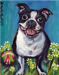 cute Daisy Boston Terrier