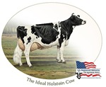Ideal Holstein Cow Featured Products