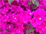 Purple's Mystique, Photo Artwork