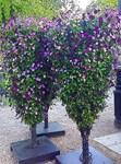 Purple Twin Beauty, Photo / Digital Painting