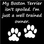 Well Trained Boston Terrier Owner