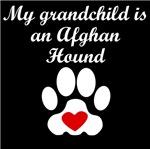 Afghan Hound Grandchild