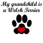 Welsh Terrier Grandchild