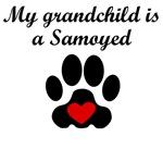 Samoyed Grandchild