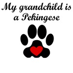 Pekingese Grandchild