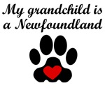 Newfoundland Grandchild