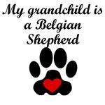 Belgian Shepherd Grandchild