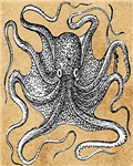 Victorian Octopus on Parchment