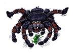 tarantula meets prey