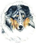 Shetland Sheepdog Blue Merle Sheltie Gifts Product
