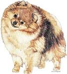 Pomeranian Pom Portrait Unique Apparel & T-shirts