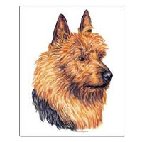 Australian Terrier Dog Framed Prints and Posters