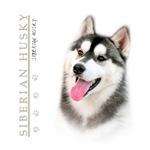 Gray & White Husky