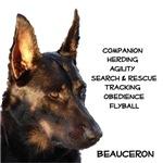 Versatile Beauceron