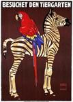 Zebra, Macaw, Zoo