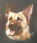 German Shepherd I
