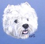 West Highland Terrier - Westie