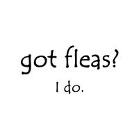 Got fleas?