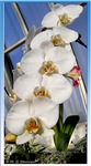 White orchids! Floral photo!