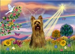 CLOUD ANGEL<br>& Silky Terrier
