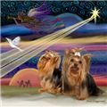 CHRISTMAS STAR<br>(2 Yorkies)