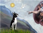 CREATION<br>& Boston Terrier