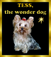 YORKSHIRE TERRIER TESS<br>CUSTOM DESIGNS