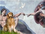 CREATION OF MAN<br>& Golden Retriever