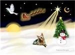 NIGHT FLIGHT<br>& Silky Terrier