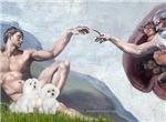 CREATION<br>Maltese + Poodle