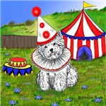 Circus Westie