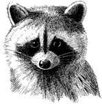 Animal Wildlife Designs