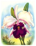 Orchid Vintage Painting Print