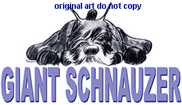 giant schnauzer lay from watercolor